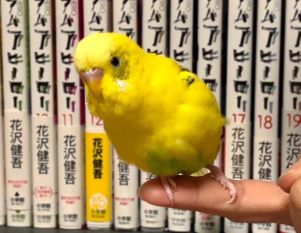 http://www.monokaki-0138.jp/hakodate/IMG_1311.jpg