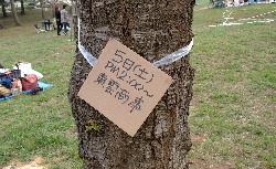goryoukaku-sakura07-a11.JPG