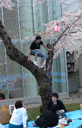 goryoukaku-sakura07-a6.JPG